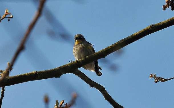 2014 Kansas Birding Big Year results compiled