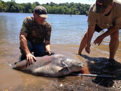 Lake record blue catfish landed in oklahoma rural messenger for Kansas fish records