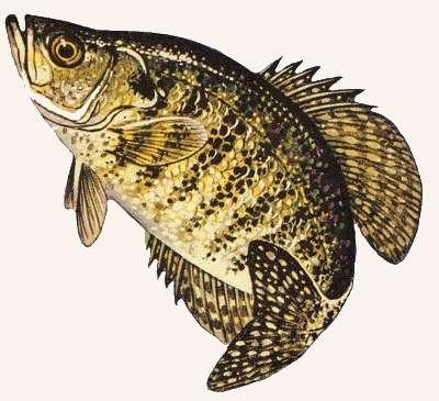 Don Blankenship 1st Fishin' for Bucks winner