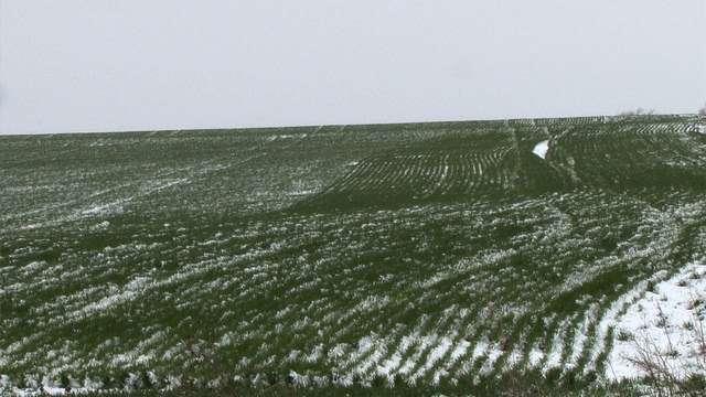 Winter Wheat Hardiness