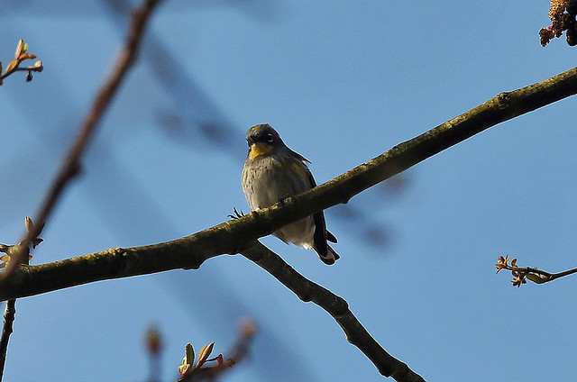 Birders talley encounters with winged friends this holiday