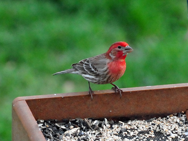 Helping birds survive the winter