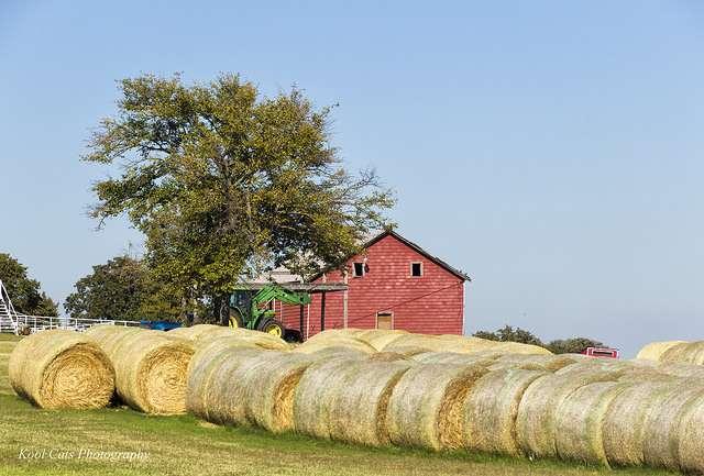 Beginning farmer and rancher development program