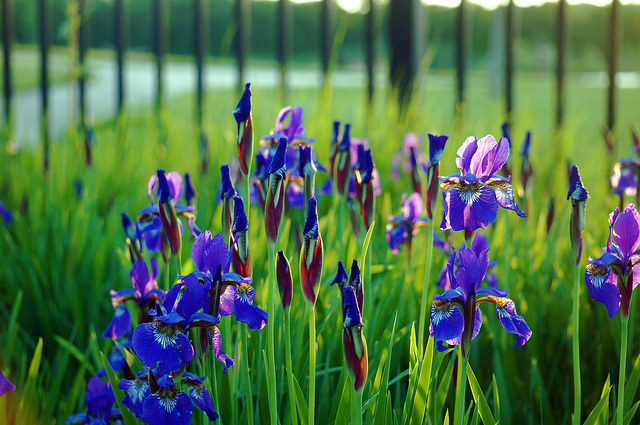Plants Recommended for Kansas