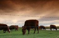 Spring Livestock Meeting