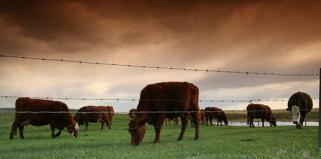 Lecturer: Genetically Engineered Animals Could Ease World Hunger