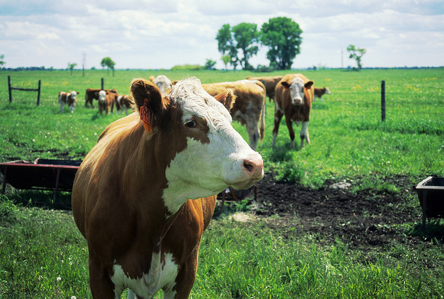March 3 Grazing School Features '300 Days of Grazing'