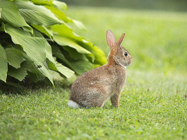 Think Spring … and Rabbit-Resistant Flowers