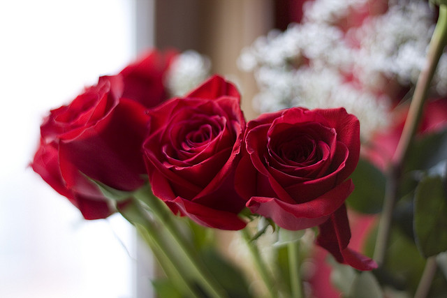 Handling Tips for Valentine's Day Roses
