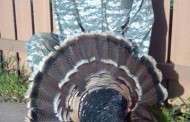 Spring Turkey Hunting Sickness