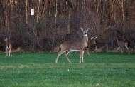 Registration Open for Assisted Deer Hunt at Tuttle Creek Lake