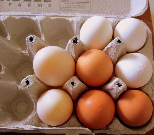 Broiler-type eggs set in the United States down slightly