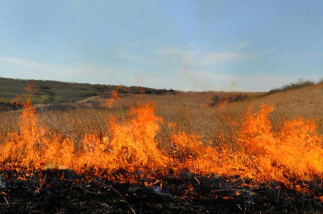 Kansas Forest Service Will Conduct Planned Burn March 22-28 in Hutchinson Area