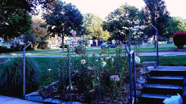Preventing Weeds in Flower Beds