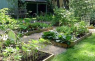 Herbicides for Home Vegetable Gardens