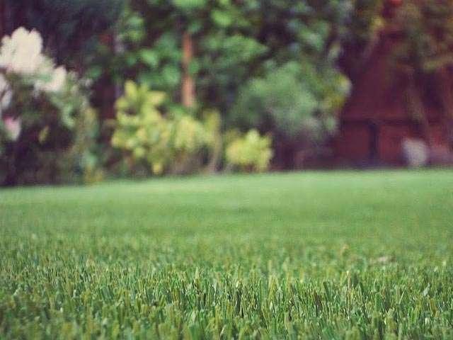 Turfgrass: Core Aeration of Cool-Season Lawns