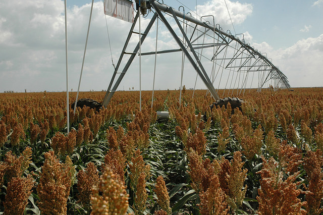 Tips for Effective and Efficient Crop Water Use