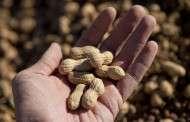 Peanut Prices