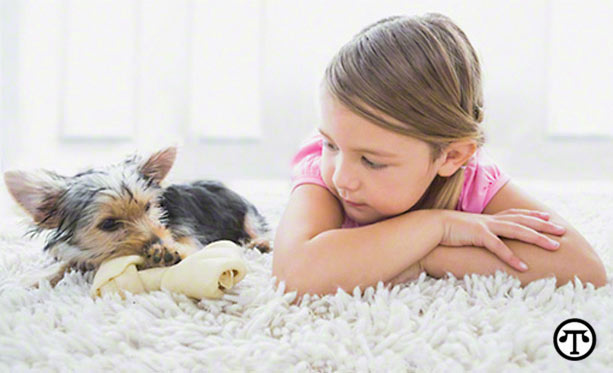 Six Common Myths About Pet Allergies
