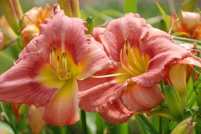 Just in Time for Spring: New List of Perennial Flowers Available