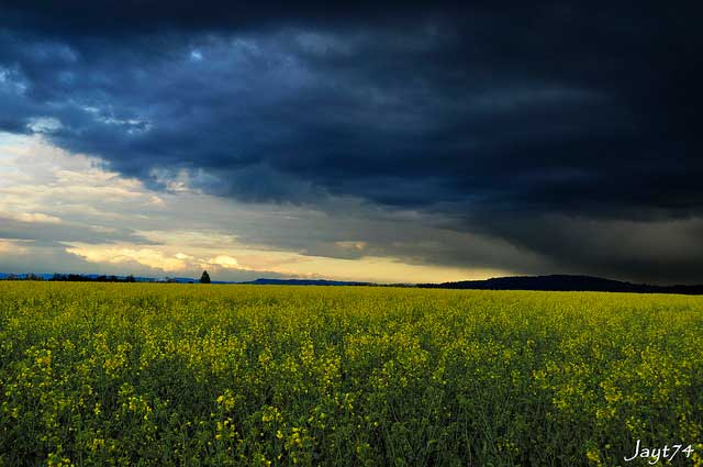 Weather Volatility Shifts Fertilizer Effectiveness
