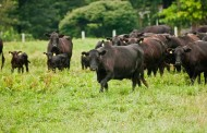 Forage supplementation and methane in beef cows is topic of July 26 webinar