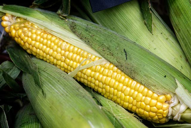 Gaeddert Farms Sweet Corn hiring