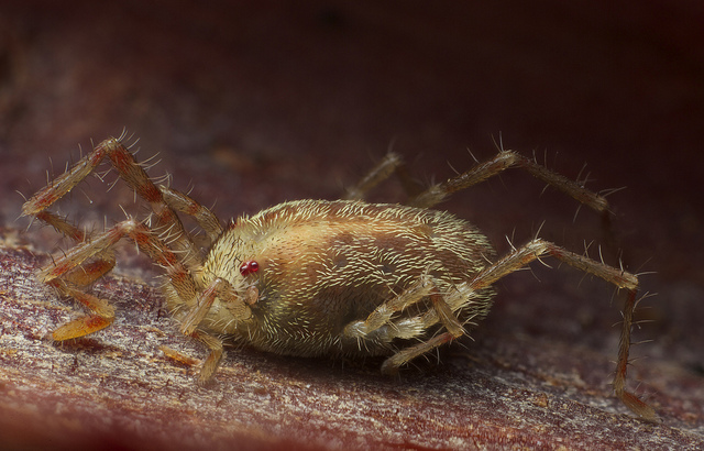 Chiggers are coming