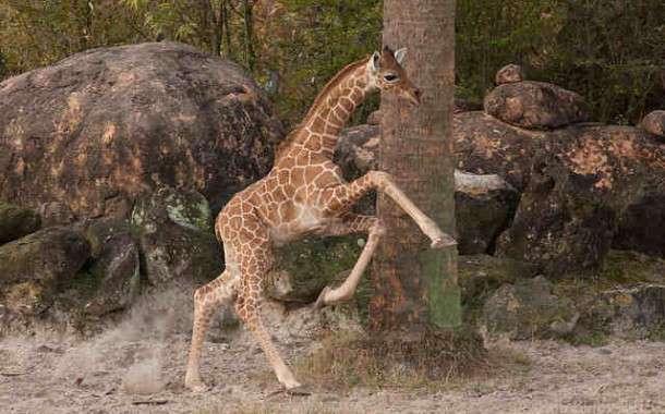 Tanganyika Wildlife Park | Rural Messenger