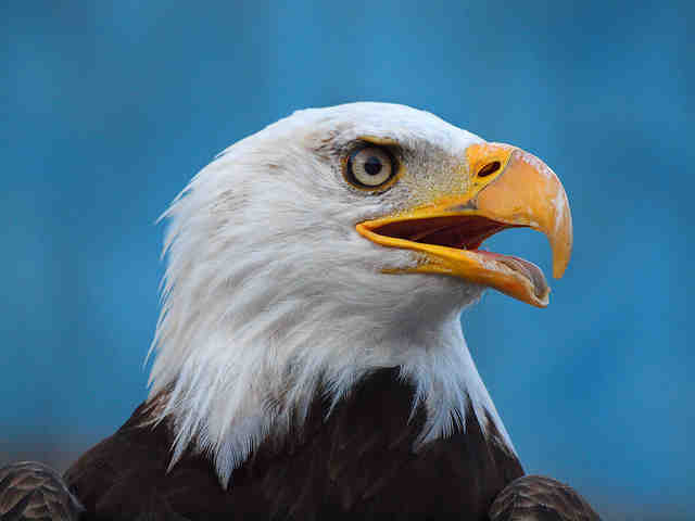 Pueblo Eagle Days is celebrating its 20th anniversary.