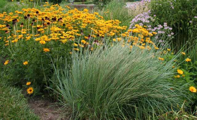 Plants for Wet Sites
