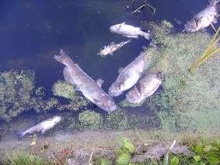 Shocking Fish, Catching Fish, Killing Fish