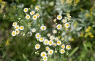 Kansas Native Plant Society to Host 2015 Annual Wildflower Weekend