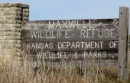 Canton: Annual Bison Auction & Lunch at Maxwell Wildlife Refuge on Nov 16