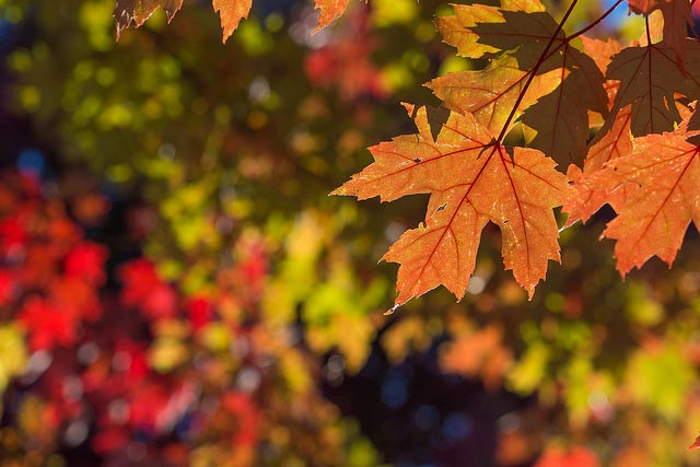Good things about Fall!