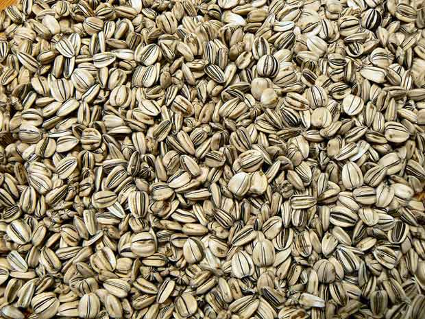Harvesting and roasting sunflower seeds