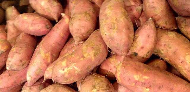 Harvesting sweet potatoes in your Kansas garden