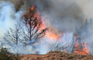 Prescribed Burning in Woodlands Workshop planned