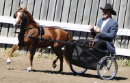 Salina: Mid-American Miniature Horse and Pony Sale is April 23