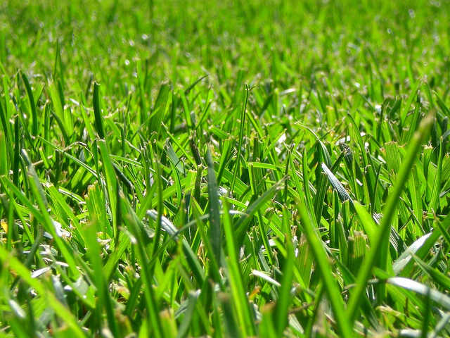 Fertilize Irrigated Cool-Season Lawns in May
