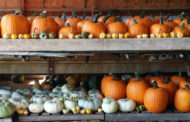 P and M Pumpkin Ranch Opening Soon