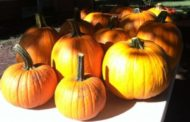 Rose Hill Meadowlark Farm Pumpkin Patch Opening Soon