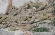 Stay Snake Savvy