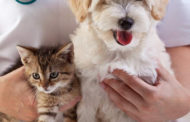 Moundridge: cat and dog vaccinations administered by Maple Street Vet at the Street Shop