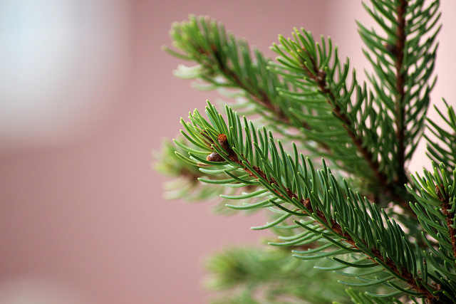 What to Do With the Christmas Tree After Christmas