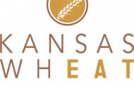 Day 15, Kansas Wheat Harvest Report