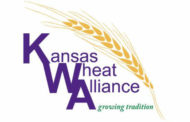 Kansas Wheat Alliance set to release new white wheat variety