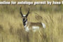 Nonresident Deer Draw Results Online