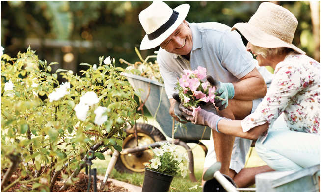 Tips for Summer Gardening Success