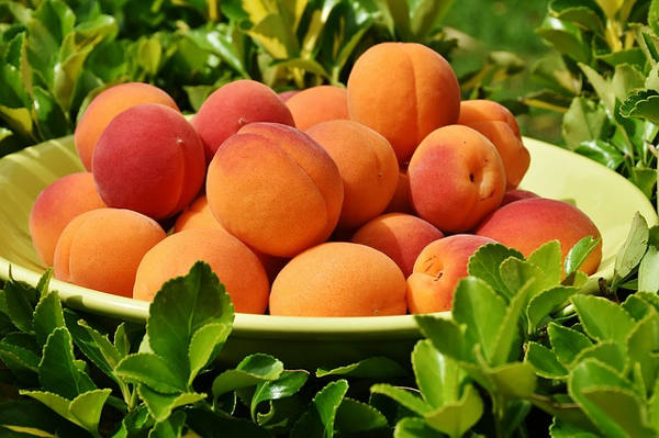Will I have Peaches This Year?